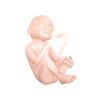 De vierentwintigste week van de zwangerschap
